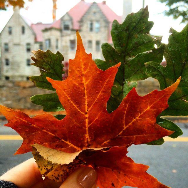 newp leaf